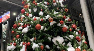 \\ クリスマスツリー登場☆ //